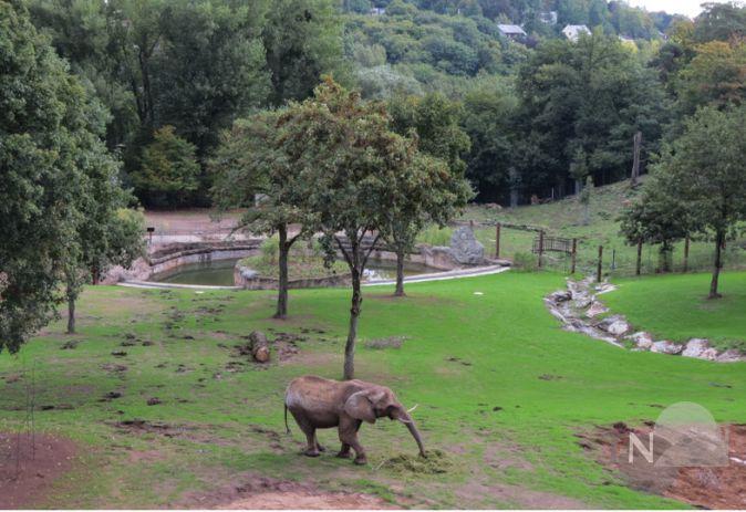 opel-zoo verzeichnet kleines besucherplus trotz großbaustelle