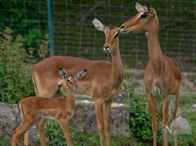 kinder, kinder … nachwuchs bei vielen huftieren im opel-zoo | taunus